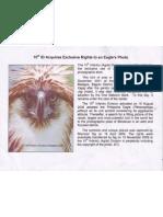10ID Eagle