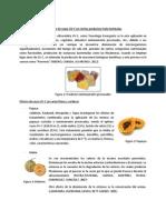 Aplicación de rayos UV en ciertos productos fruto-hortícolas