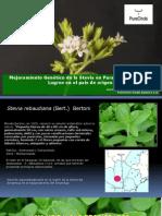 Mejoramiento Genetico Stevia. Edgar Alvarez