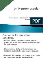 02Funcion Neuromuscular