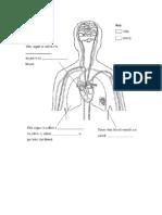 Circulatory System Handout