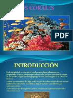 Power Point Los Corales