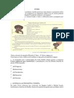 filosofia 6a serie.docx