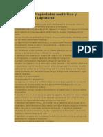 Principales Propiedades esotéricas y curativas del Lapislázuli