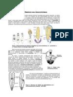 3 - Embriologia Das Angiospermas (Meristemas)