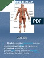 A&P Muscular Chap 7