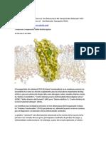 Científicos Revelan la Estructura en Tres Dimensiones del Transportador Molecular TSPO