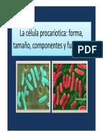 Estructura celula procariotica