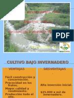Produccion y Acopio de Hortalizas - Pueblo Viejo