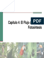 Capitulo04_Fotosíntesis