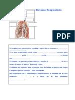 3º ano-sistema_respiratorio