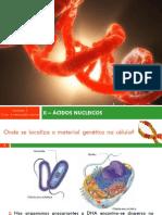 1.1.4-Ácidos Nucleicos
