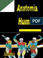 Anatomia 1B