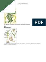 Planta Medicinales