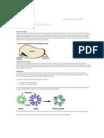 ¿Cómo funciona.pdf