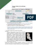 Estudo DirigidoEnfermagem 2