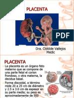 16 Placenta