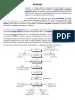 U3-ProcesoCompilacion