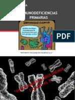 Hipogammaglobulinemia Ligado Al x.1