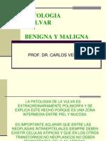 Patologia Vulvar - Prof Vera U (1)