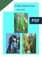Bosques-templados