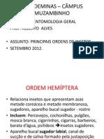 APRESENTAÇÃO ORDENS DE INSETOS