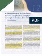 Capitulo XII Comportamiento intracelular retículo endoplásmatico Complejo de Golgi Endosomas Liso