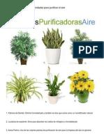 6 Plantas de Interior Recomendadas Para Purificar El Aire
