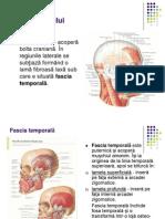 Muşchii capului
