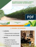 09_biomassa_plantio_adensado