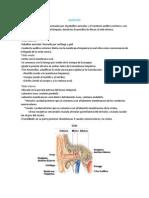 DOC Audición y sistema vestibular