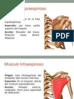 Músculos Escápula.pptx