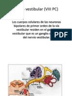 Nervio Vestibular (VIII PC)