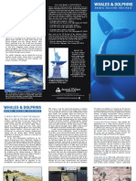 Whales and Dolphins PDF