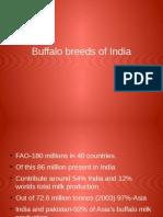 Buffalo Breeds of india