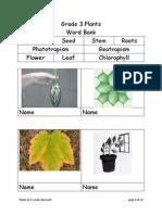 Plants Gr 3 Vocab Classwork