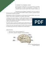 El Cerebro y El Cerebro Animal