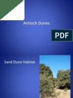 antioch dunesaa
