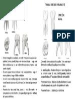 Trabajo Anatomía Dentara