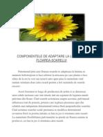 Componentele de Adaptare La Lumina La Floarea
