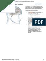 El Alzheimer y el cerebro (16 págs.)