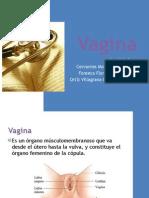 19814984-Vagina