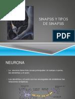 Clase 3 Sinapsis y Tipos de Sinapsis