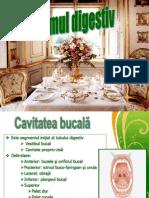 4Curs MG, Cavitate Bucala (1)