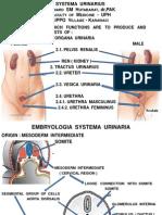 Kulpak UPN - Anatomi