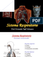 Sistema Respiratorio FVV