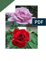 bunga ku.docx