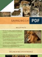 Saving Big Cats