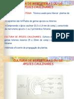 CULTURA DE MERISTEMAS OU DE ÁPICES CAULINARESCOMP - Cópia