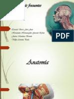 Patologías más frecuentes de cuello